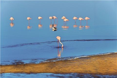 【尚·猎奇】纳米比亚10天*探秘之旅*苏丝斯黎红沙漠*辛巴红泥人部落<埃托沙国家公园,鲸湾出海,生蚝香槟特色餐>