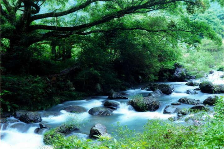 【生态*赏花】从化1天*石门森林公园赏红叶*果园<含餐>